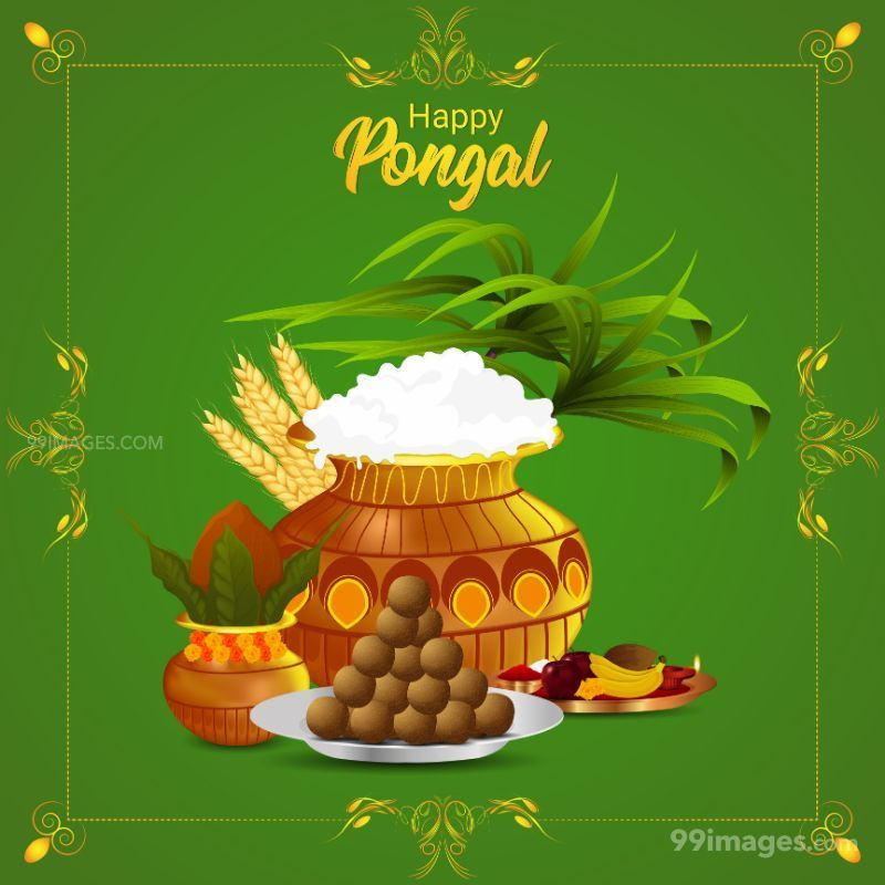[14th January 2021] Happy Pongal (Pongal Vazhthukkal) WhatsApp DP Images, Wishes, Quotes, Messages HD (708989) - Pongal