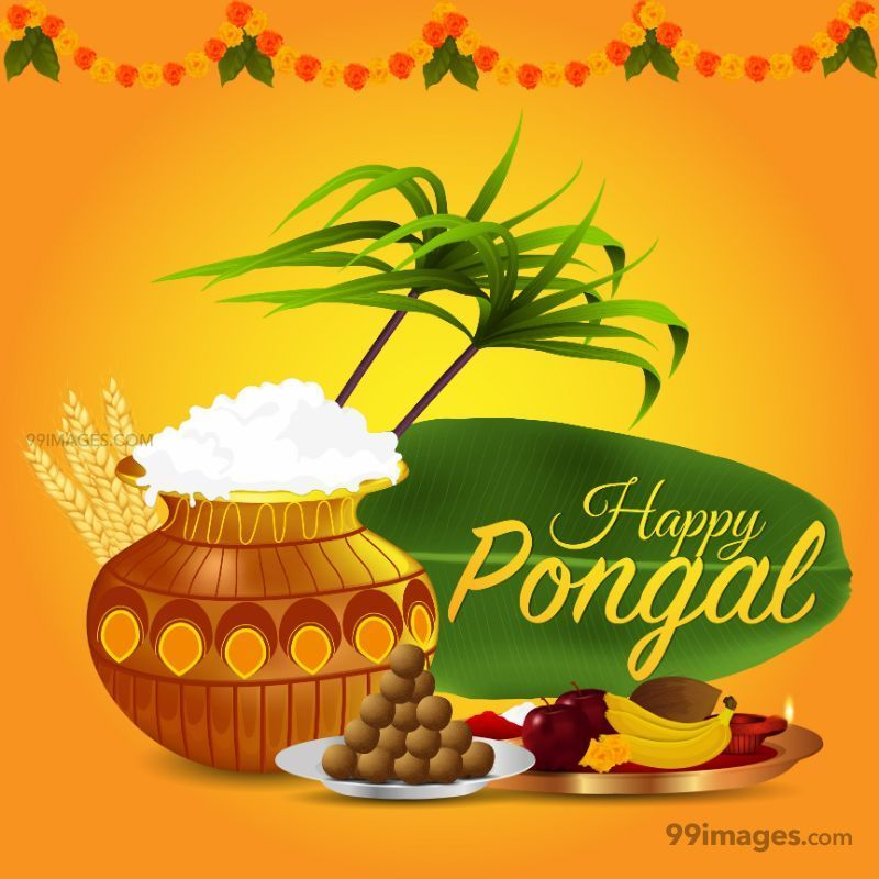 [14th January 2021] Happy Pongal (Pongal Vazhthukkal) WhatsApp DP Images, Wishes, Quotes, Messages HD (708988) - Pongal