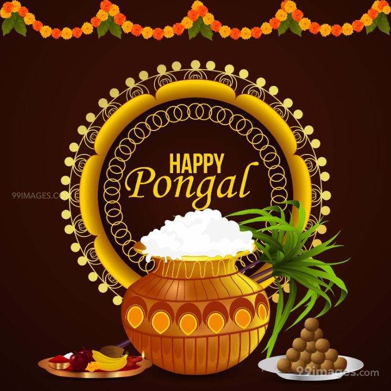 [14th January 2021] Happy Pongal (Pongal Vazhthukkal) WhatsApp DP Images, Wishes, Quotes, Messages HD (708992) - Pongal