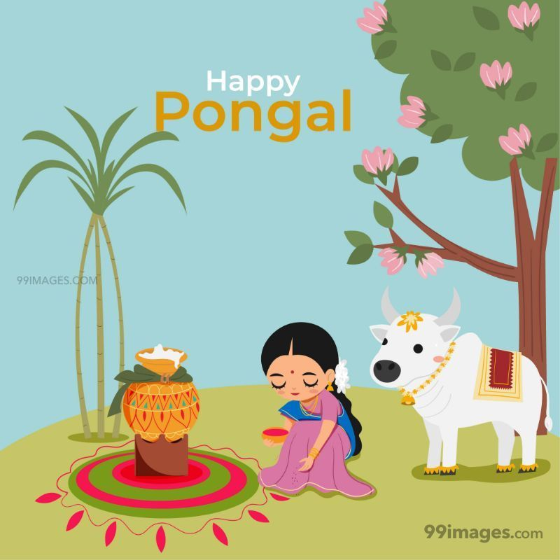 [14th January 2021] Happy Pongal (Pongal Vazhthukkal) WhatsApp DP Images, Wishes, Quotes, Messages HD (708995) - Pongal