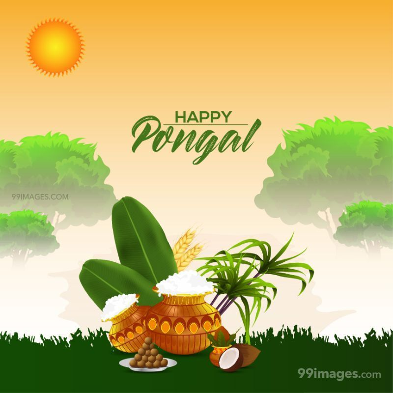 [14th January 2021] Happy Pongal (Pongal Vazhthukkal) WhatsApp DP Images, Wishes, Quotes, Messages HD (709000) - Pongal