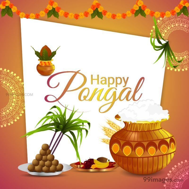 [14th January 2021] Happy Pongal (Pongal Vazhthukkal) WhatsApp DP Images, Wishes, Quotes, Messages HD (708994) - Pongal