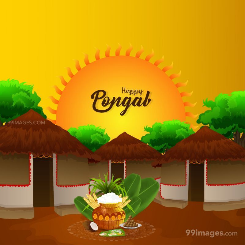 [14th January 2021] Happy Pongal (Pongal Vazhthukkal) WhatsApp DP Images, Wishes, Quotes, Messages HD (709001) - Pongal