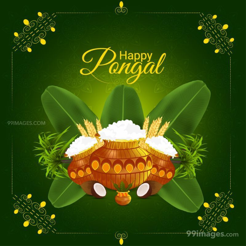 [14th January 2021] Happy Pongal (Pongal Vazhthukkal) WhatsApp DP Images, Wishes, Quotes, Messages HD (708997) - Pongal