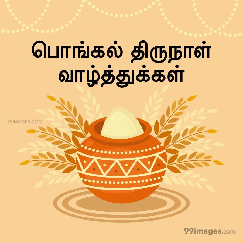 [14th January 2021] Happy Pongal (Pongal Vazhthukkal) in Tamil, WhatsApp DP Images, Wishes, Quotes, Messages HD (282373) - Pongal
