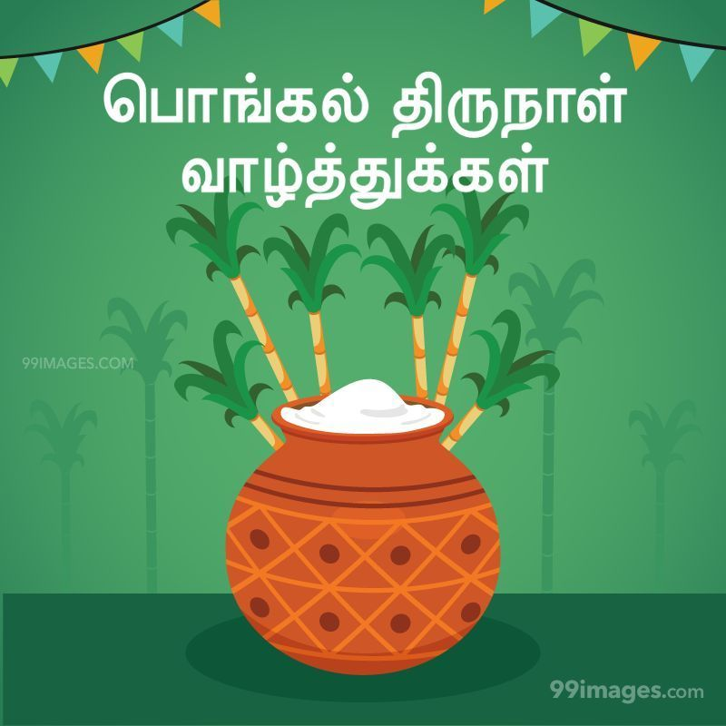 [14th January 2021] Happy Pongal (Pongal Vazhthukkal) in Tamil, WhatsApp DP Images, Wishes, Quotes, Messages HD (282321) - Pongal