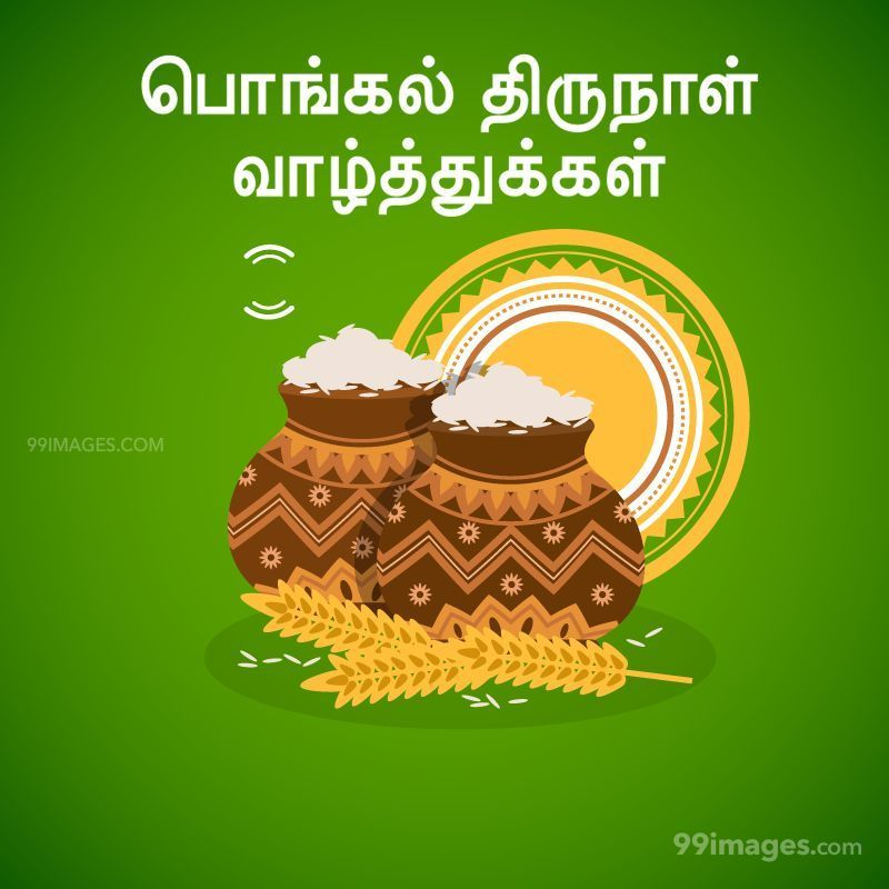 [14th January 2021] Happy Pongal (Pongal Vazhthukkal) in Tamil, WhatsApp DP Images, Wishes, Quotes, Messages HD (282317) - Pongal