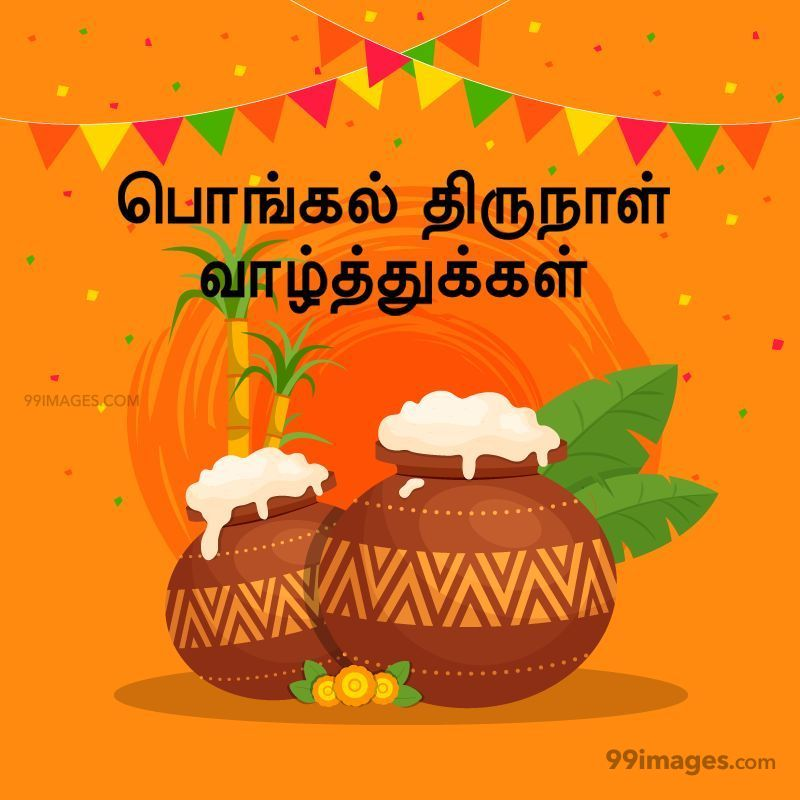 [14th January 2021] Happy Pongal (Pongal Vazhthukkal) in Tamil, WhatsApp DP Images, Wishes, Quotes, Messages HD (282281) - Pongal