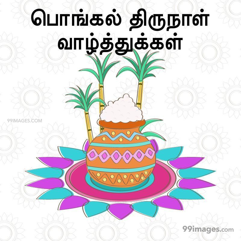 [14th January 2021] Happy Pongal (Pongal Vazhthukkal) in Tamil, WhatsApp DP Images, Wishes, Quotes, Messages HD (282308) - Pongal