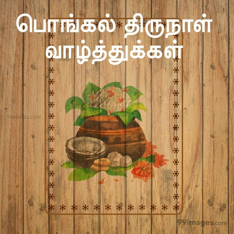 [15th January 2020] Happy Pongal (Pongal Vazhthukkal) in Tamil, WhatsApp DP Images, Wishes, Quotes, Messages HD (282230) - Pongal