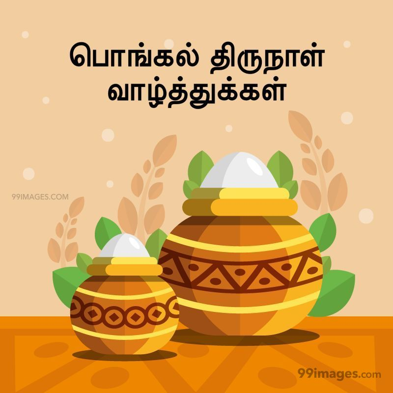 [14th January 2021] Happy Pongal (Pongal Vazhthukkal) in Tamil, WhatsApp DP Images, Wishes, Quotes, Messages HD (282429) - Pongal