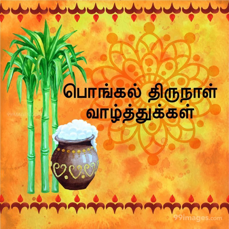 [14th January 2021] Happy Pongal (Pongal Vazhthukkal) in Tamil, WhatsApp DP Images, Wishes, Quotes, Messages HD (282319) - Pongal