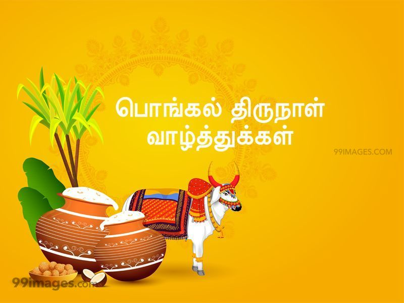 [14th January 2021] Happy Pongal (Pongal Vazhthukkal) in Tamil, WhatsApp DP Images, Wishes, Quotes, Messages HD (283394) - Pongal