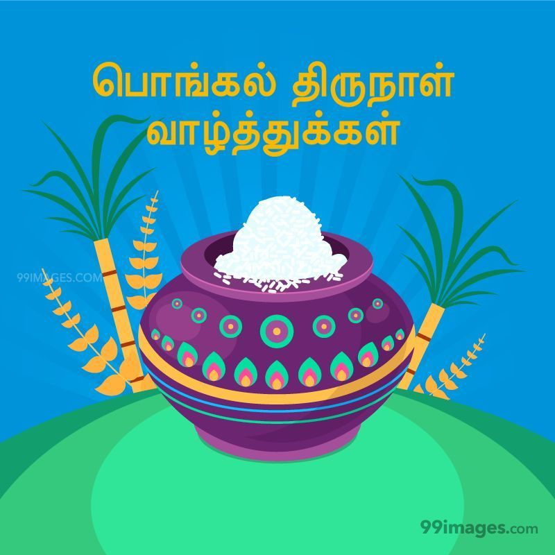 [15th January 2020] Happy Pongal (Pongal Vazhthukkal) in Tamil, WhatsApp DP Images, Wishes, Quotes, Messages HD (282428) - Pongal