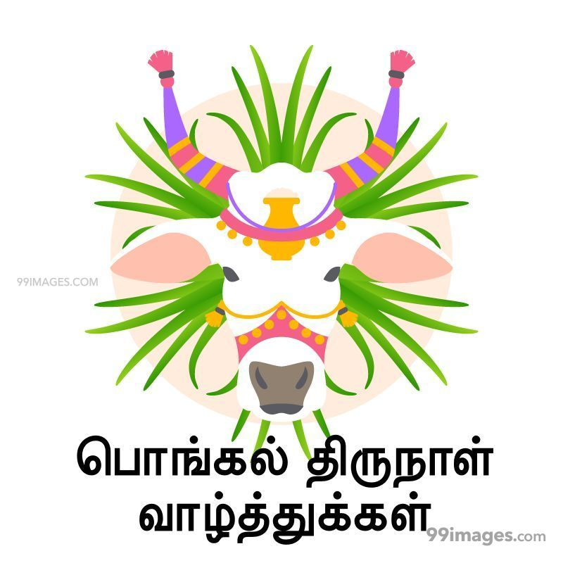 [14th January 2021] Happy Pongal (Pongal Vazhthukkal) in Tamil, WhatsApp DP Images, Wishes, Quotes, Messages HD (282380) - Pongal