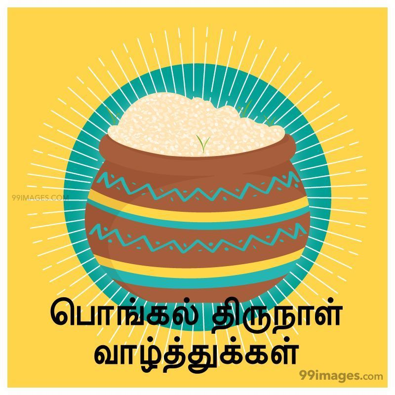 [14th January 2021] Happy Pongal (Pongal Vazhthukkal) in Tamil, WhatsApp DP Images, Wishes, Quotes, Messages HD (282400) - Pongal