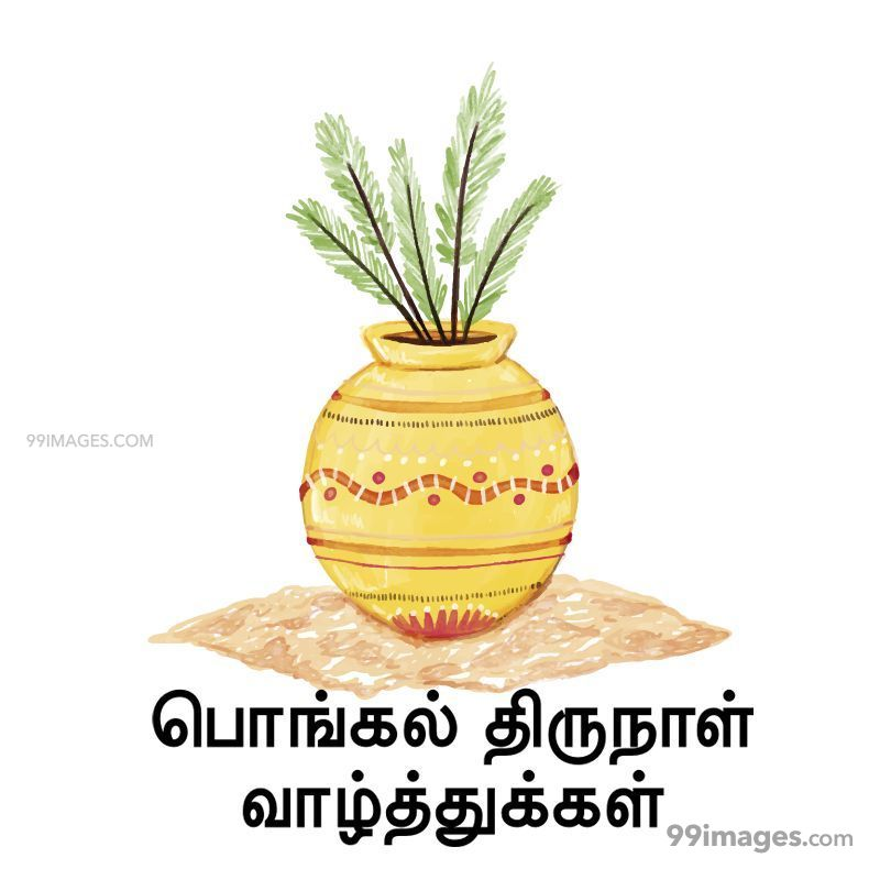 [14th January 2021] Happy Pongal (Pongal Vazhthukkal) in Tamil, WhatsApp DP Images, Wishes, Quotes, Messages HD (282382) - Pongal
