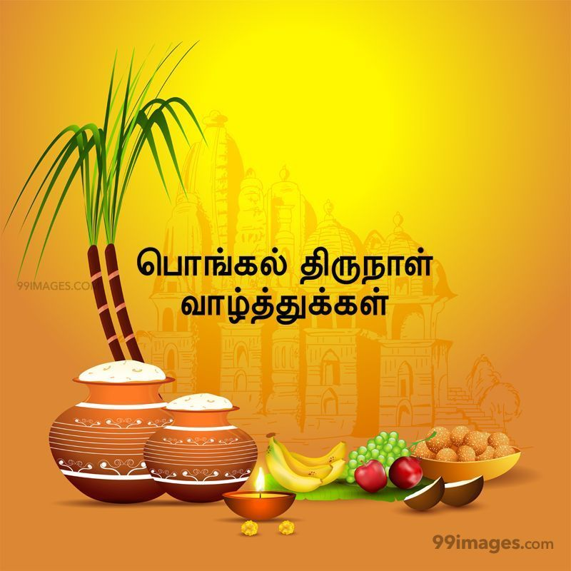 [14th January 2021] Happy Pongal (Pongal Vazhthukkal) in Tamil, WhatsApp DP Images, Wishes, Quotes, Messages HD (283383) - Pongal