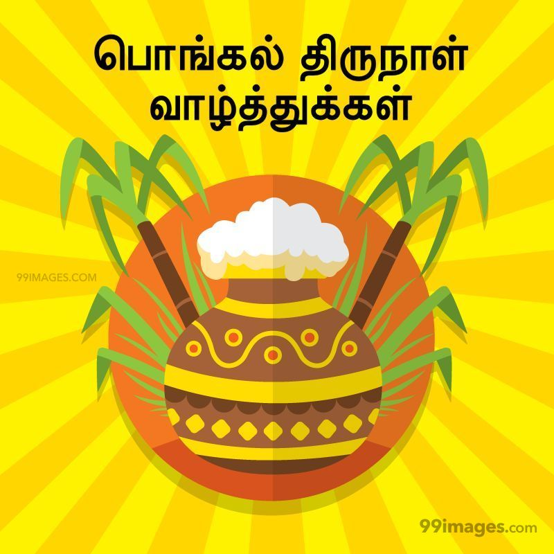 [14th January 2021] Happy Pongal (Pongal Vazhthukkal) in Tamil, WhatsApp DP Images, Wishes, Quotes, Messages HD (282300) - Pongal