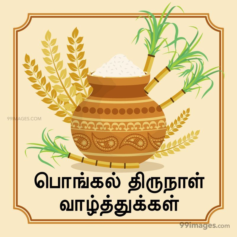 [14th January 2021] Happy Pongal (Pongal Vazhthukkal) in Tamil, WhatsApp DP Images, Wishes, Quotes, Messages HD (282398) - Pongal