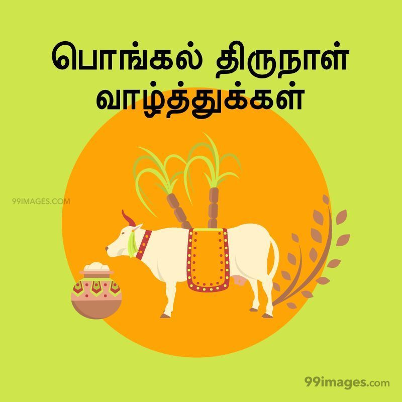[14th January 2021] Happy Pongal (Pongal Vazhthukkal) in Tamil, WhatsApp DP Images, Wishes, Quotes, Messages HD (282296) - Pongal