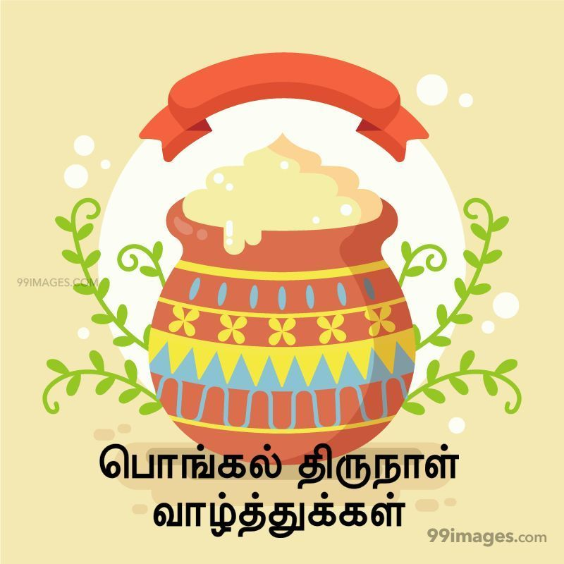 [14th January 2021] Happy Pongal (Pongal Vazhthukkal) in Tamil, WhatsApp DP Images, Wishes, Quotes, Messages HD (282407) - Pongal