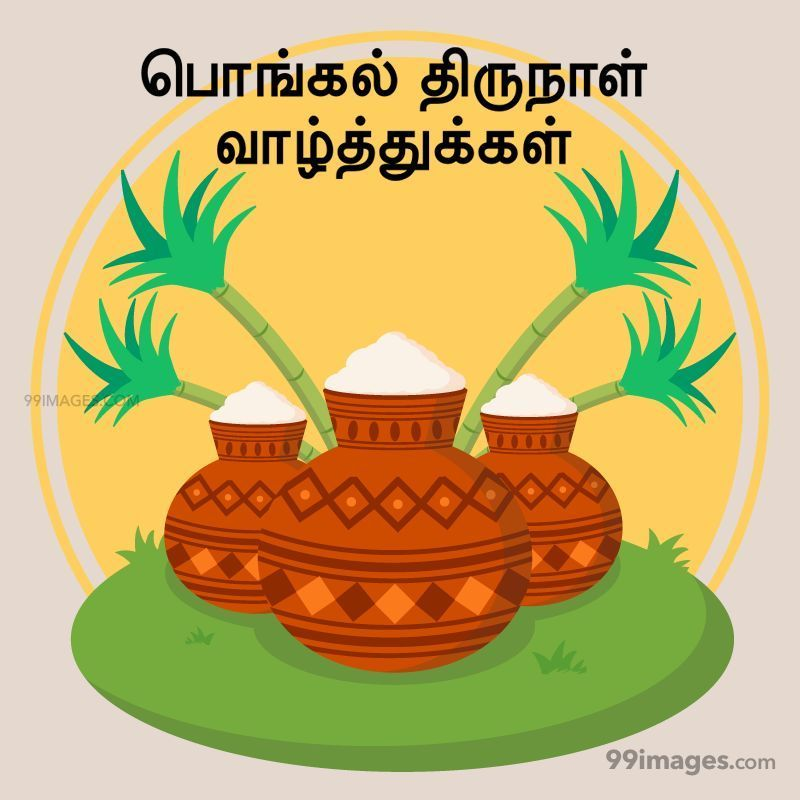 [14th January 2021] Happy Pongal (Pongal Vazhthukkal) in Tamil, WhatsApp DP Images, Wishes, Quotes, Messages HD (282421) - Pongal