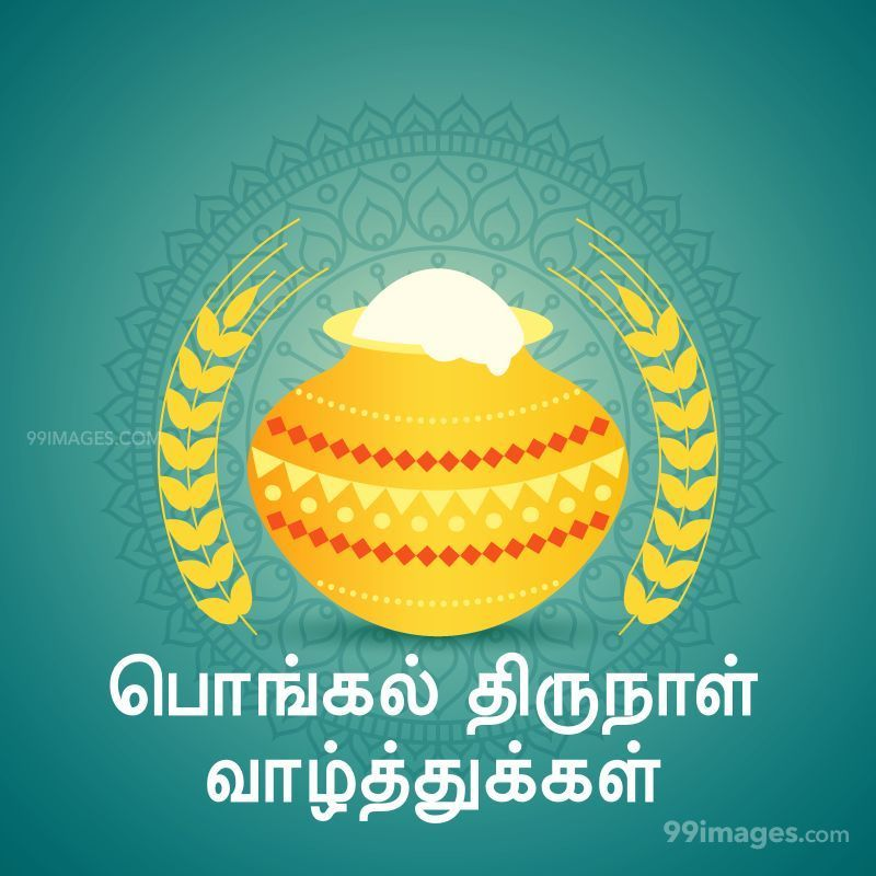 [14th January 2021] Happy Pongal (Pongal Vazhthukkal) in Tamil, WhatsApp DP Images, Wishes, Quotes, Messages HD (282368) - Pongal