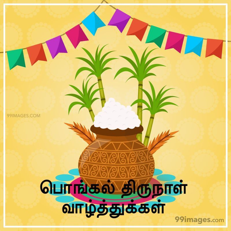 [14th January 2021] Happy Pongal (Pongal Vazhthukkal) in Tamil, WhatsApp DP Images, Wishes, Quotes, Messages HD (282307) - Pongal