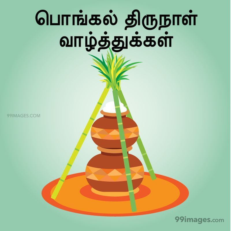 [14th January 2021] Happy Pongal (Pongal Vazhthukkal) in Tamil, WhatsApp DP Images, Wishes, Quotes, Messages HD (282301) - Pongal