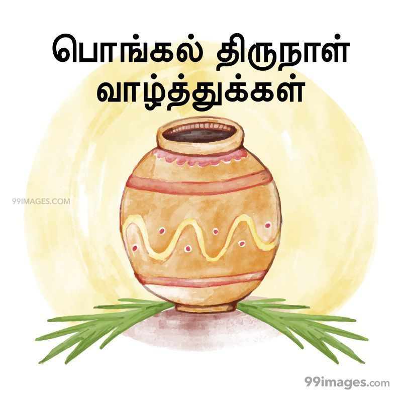 [14th January 2021] Happy Pongal (Pongal Vazhthukkal) in Tamil, WhatsApp DP Images, Wishes, Quotes, Messages HD (282384) - Pongal