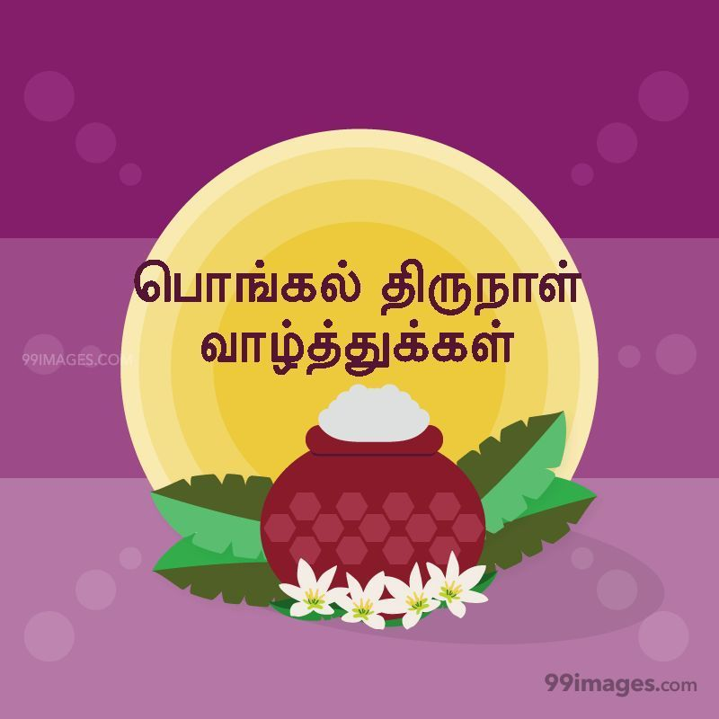 [14th January 2021] Happy Pongal (Pongal Vazhthukkal) in Tamil, WhatsApp DP Images, Wishes, Quotes, Messages HD (282381) - Pongal