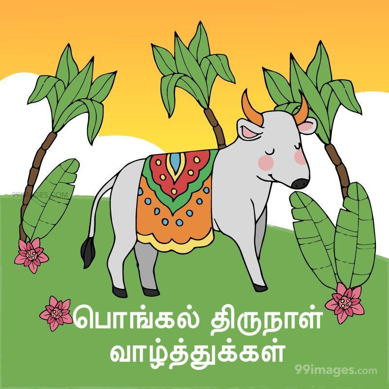 [14th January 2021] Happy Pongal (Pongal Vazhthukkal) in Tamil, WhatsApp DP Images, Wishes, Quotes, Messages HD (282282) - Pongal