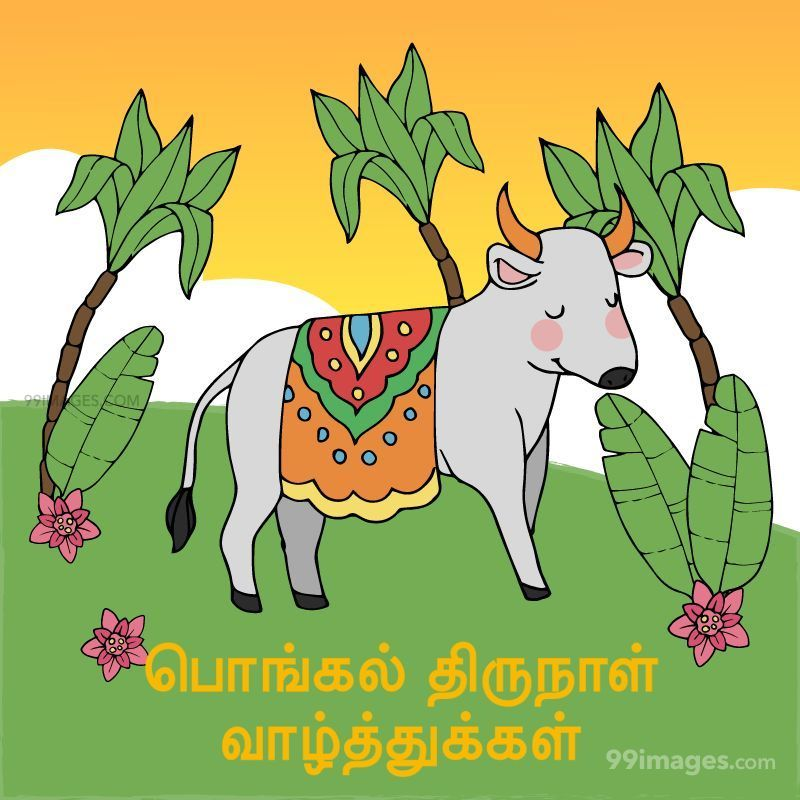 [14th January 2021] Happy Pongal (Pongal Vazhthukkal) in Tamil, WhatsApp DP Images, Wishes, Quotes, Messages HD (282418) - Pongal