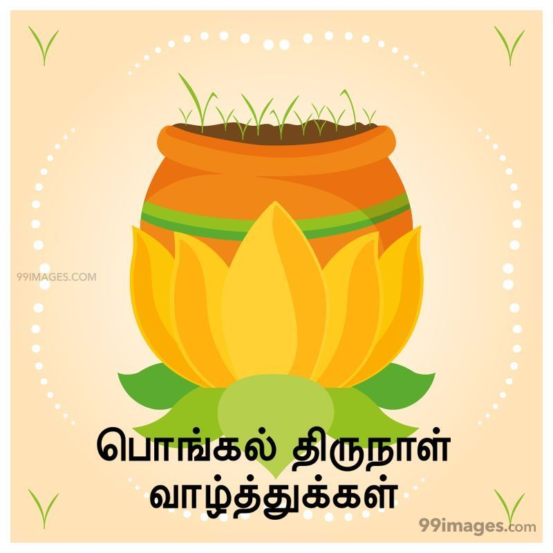 [14th January 2021] Happy Pongal (Pongal Vazhthukkal) in Tamil, WhatsApp DP Images, Wishes, Quotes, Messages HD (282401) - Pongal
