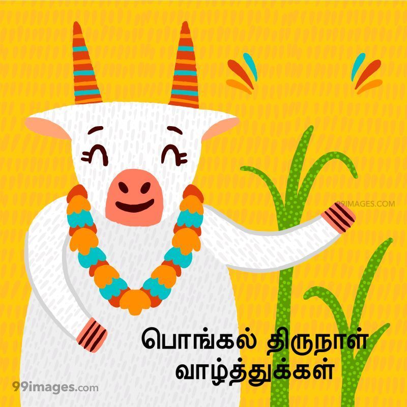 [14th January 2021] Happy Pongal (Pongal Vazhthukkal) in Tamil, WhatsApp DP Images, Wishes, Quotes, Messages HD (283392) - Pongal