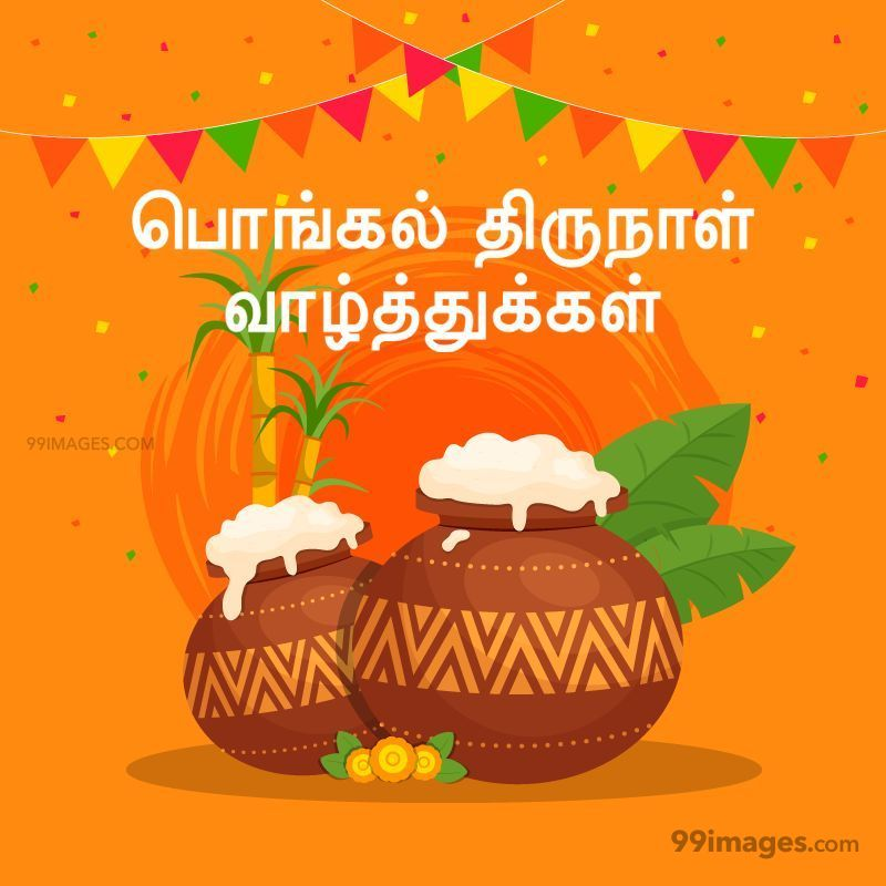 [15th January 2020] Happy Pongal (Pongal Vazhthukkal) in Tamil, WhatsApp DP Images, Wishes, Quotes, Messages HD (282412) - Pongal
