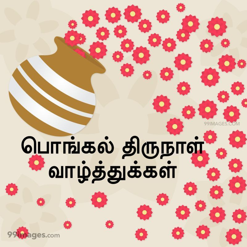 [14th January 2021] Happy Pongal (Pongal Vazhthukkal) in Tamil, WhatsApp DP Images, Wishes, Quotes, Messages HD (282367) - Pongal
