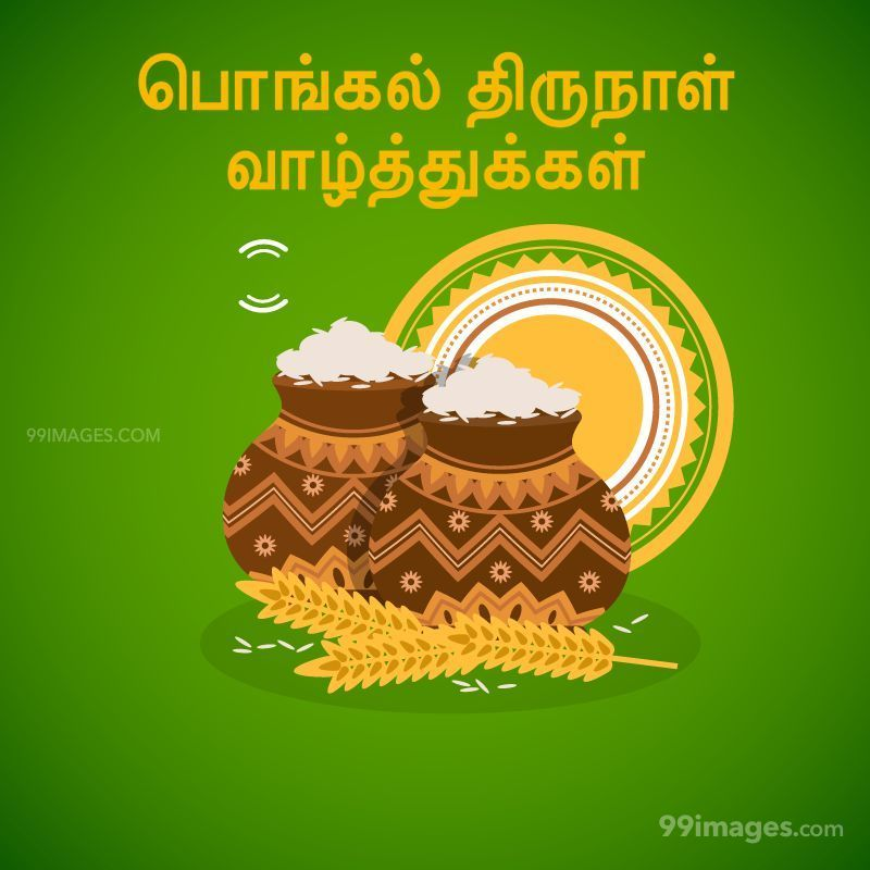 [15th January 2020] Happy Pongal (Pongal Vazhthukkal) in Tamil, WhatsApp DP Images, Wishes, Quotes, Messages HD (282258) - Pongal