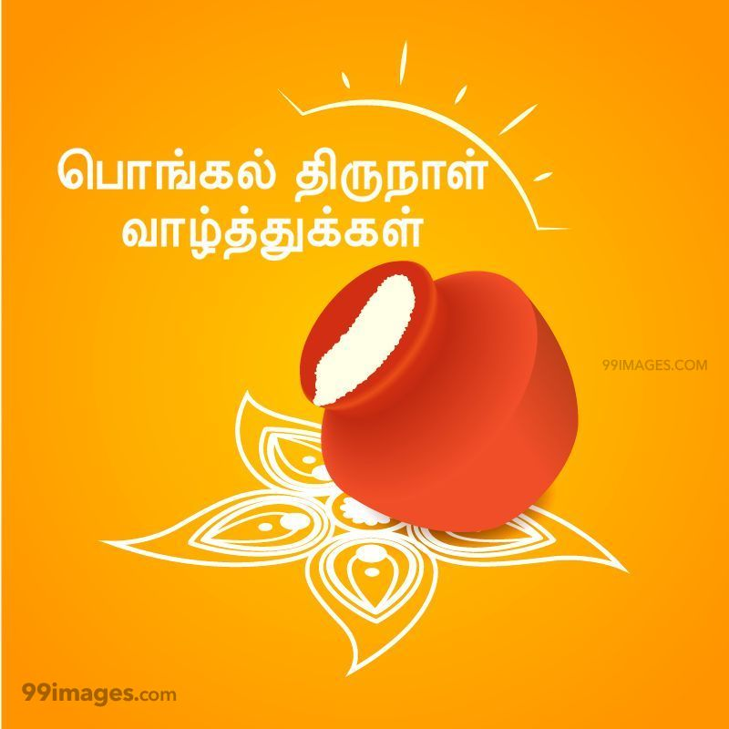 [14th January 2021] Happy Pongal (Pongal Vazhthukkal) in Tamil, WhatsApp DP Images, Wishes, Quotes, Messages HD (282249) - Pongal