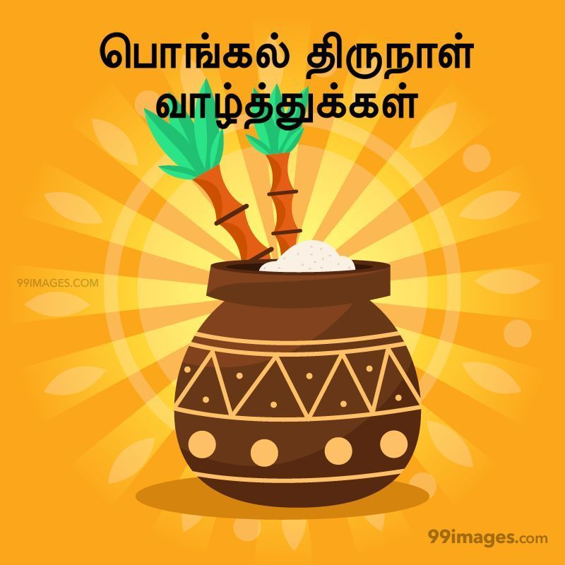[14th January 2021] Happy Pongal (Pongal Vazhthukkal) in Tamil, WhatsApp DP Images, Wishes, Quotes, Messages HD (282413) - Pongal