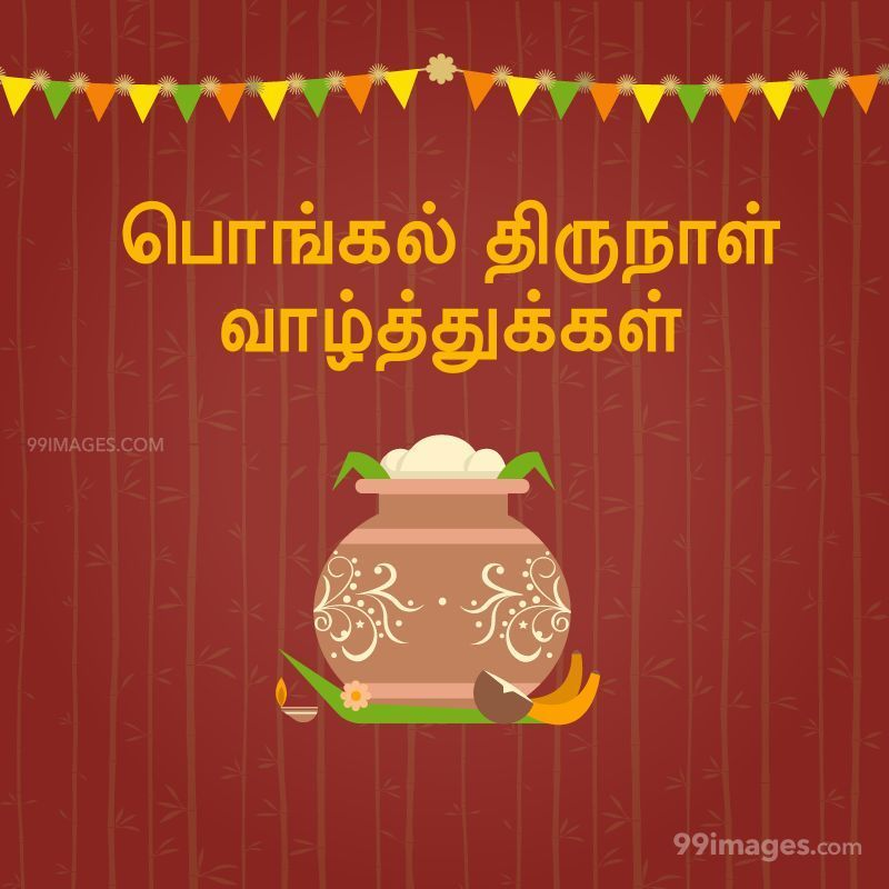 [15th January 2020] Happy Pongal (Pongal Vazhthukkal) in Tamil, WhatsApp DP Images, Wishes, Quotes, Messages HD (282298) - Pongal