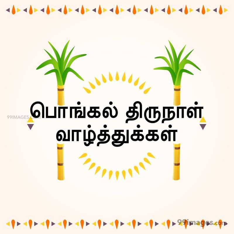 [14th January 2021] Happy Pongal (Pongal Vazhthukkal) in Tamil, WhatsApp DP Images, Wishes, Quotes, Messages HD (282335) - Pongal