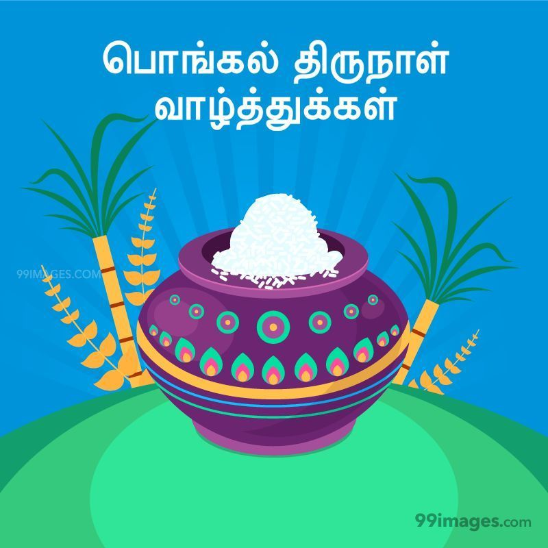 [14th January 2021] Happy Pongal (Pongal Vazhthukkal) in Tamil, WhatsApp DP Images, Wishes, Quotes, Messages HD (282402) - Pongal
