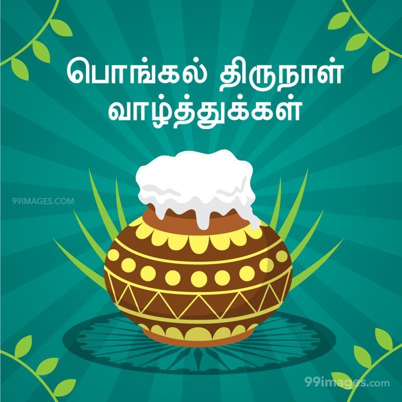 [14th January 2021] Happy Pongal (Pongal Vazhthukkal) in Tamil, WhatsApp DP Images, Wishes, Quotes, Messages HD (282299) - Pongal