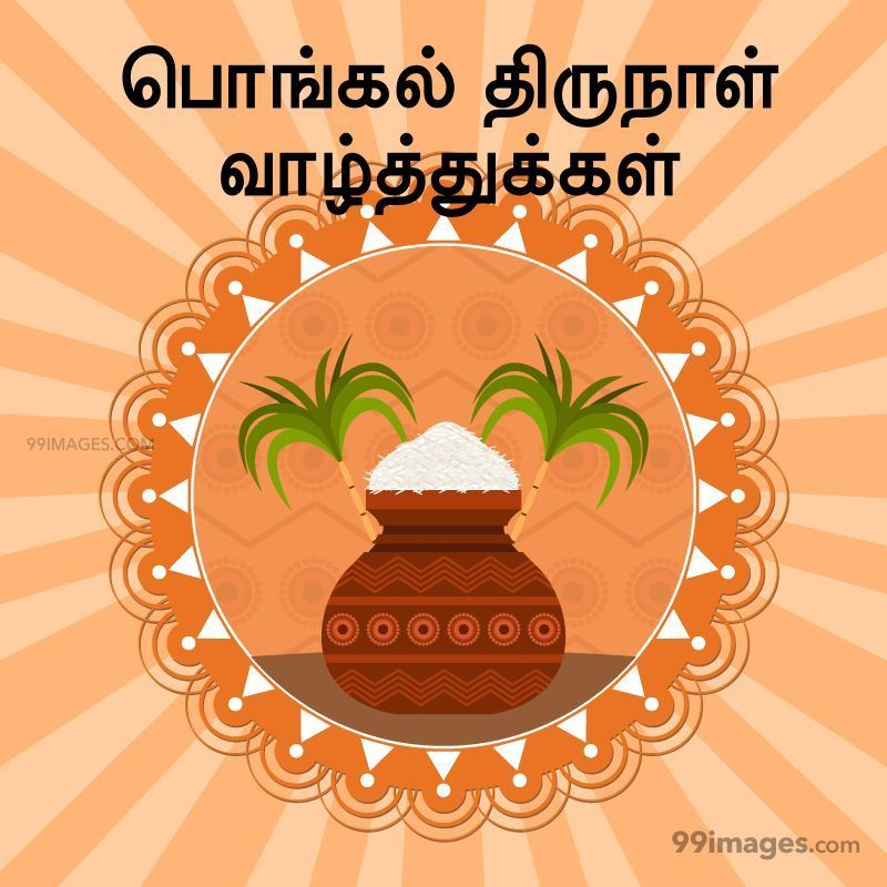 [14th January 2021] Happy Pongal (Pongal Vazhthukkal) in Tamil, WhatsApp DP Images, Wishes, Quotes, Messages HD (282267) - Pongal