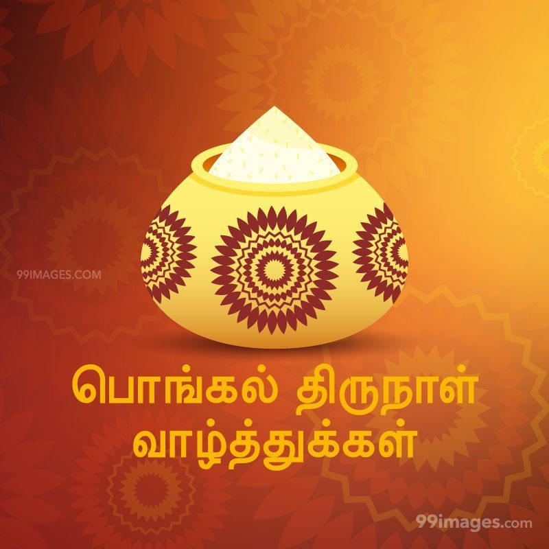 [14th January 2021] Happy Pongal (Pongal Vazhthukkal) in Tamil, WhatsApp DP Images, Wishes, Quotes, Messages HD (282370) - Pongal