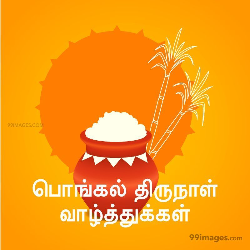 [14th January 2021] Happy Pongal (Pongal Vazhthukkal) in Tamil, WhatsApp DP Images, Wishes, Quotes, Messages HD (282333) - Pongal