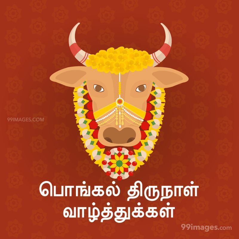 [14th January 2021] Happy Pongal (Pongal Vazhthukkal) in Tamil, WhatsApp DP Images, Wishes, Quotes, Messages HD (282309) - Pongal