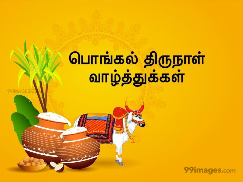 [14th January 2021] Happy Pongal (Pongal Vazhthukkal) in Tamil, WhatsApp DP Images, Wishes, Quotes, Messages HD (283380) - Pongal